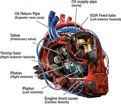 basic engine diagram trusted schematics wiring diagrams u2022 rh bestbooksrichtreasures com basic car engine wiring diagram basic engine wiring diagram